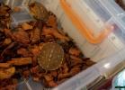 i-love-reptiles-nov-2015-028