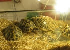 i-love-reptiles-novembre-2014-002