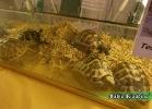 i-love-reptiles-novembre-2014-003