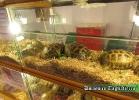 i-love-reptiles-novembre-2014-006