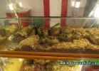 i-love-reptiles-novembre-2014-007