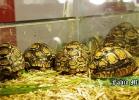 i-love-reptiles-novembre-2014-008