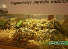 i-love-reptiles-novembre-2014-009