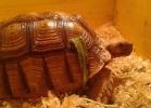 i-love-reptiles-novembre-2014-014