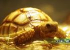 i-love-reptiles-novembre-2014-015
