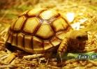 i-love-reptiles-novembre-2014-015a