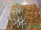 i-love-reptiles-novembre-2014-016