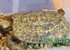 i-love-reptiles-novembre-2014-019
