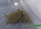 i-love-reptiles-novembre-2014-023