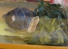 i-love-reptiles-novembre-2014-026