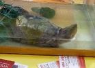 i-love-reptiles-novembre-2014-027