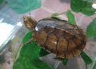 i-love-reptiles-novembre-2014-028