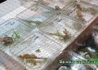 i-love-reptiles-novembre-2014-034