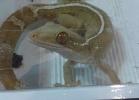 i-love-reptiles-novembre-2014-038