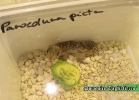 i-love-reptiles-novembre-2014-040