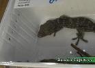 i-love-reptiles-novembre-2014-043