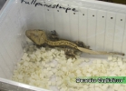 i-love-reptiles-novembre-2014-044