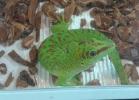 i-love-reptiles-novembre-2014-049