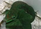 i-love-reptiles-novembre-2014-050
