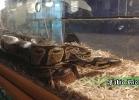 i-love-reptiles-novembre-2014-054