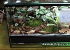 i-love-reptiles-novembre-2014-061
