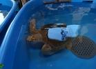 inaug-centro-ricerche-tarta-marine-portici-033
