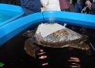 inaug-centro-ricerche-tarta-marine-portici-038