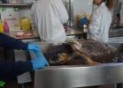 inaug-centro-ricerche-tarta-marine-portici-051