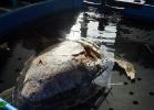 inaug-centro-ricerche-tarta-marine-portici-052