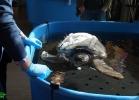 inaug-centro-ricerche-tarta-marine-portici-054