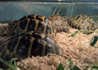 reptiles-day-mag-2016-003