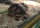 reptiles-day-mag-2016-006
