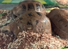 reptiles-day-mag-2016-007