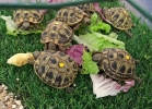 reptiles-day-mag-2016-016