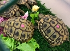 reptiles-day-mag-2016-017