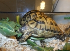 reptiles-day-sett-2015-003