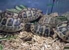 reptiles-day-sett-2015-005