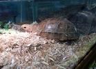 reptiles-day-sett-2015-011
