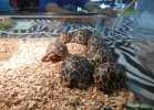 reptiles-day-sett-2015-018