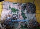 reptiles-day-sett-2015-027
