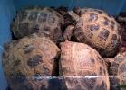 reptiles-day-sett-2015-036