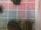 reptiles-day-sett-2015-048
