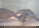 reptiles-day-sett-2015-051
