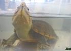 reptiles-day-sett-2015-055