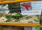 rettili-dal-mondo-2013-paolo-marchese-052