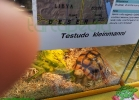 rettili-dal-mondo-2013-paolo-marchese-056