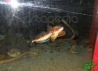 tartapedia-acquario-napoli-0008