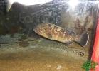 tartapedia-acquario-napoli-0013