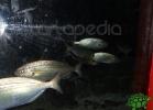tartapedia-acquario-napoli-0014