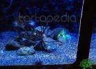 tartapedia-acquario-napoli-0021